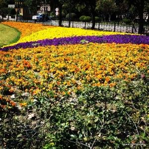 FlowerField-001
