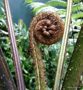 Blooming Fern
