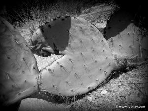 CactusBite
