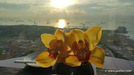 OrchidSunrise